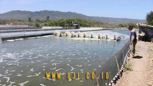 Cara Mengukur Kualitas Air Kolam Tambak
