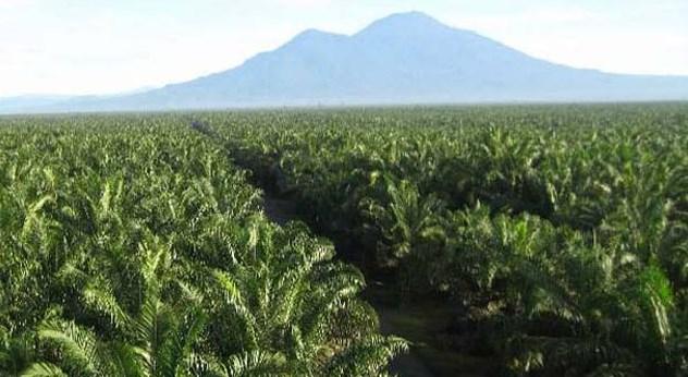 Pengaruh pH Tanah Terhadap Tanaman